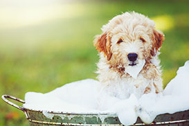 Puppy In Suds